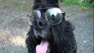 New Glasses for Richard the Dog